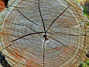 Foto met jaarringen van boom