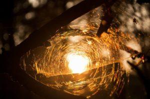 Foto spnnenweb in zonlicht