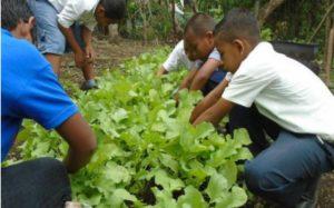 Foto Adventsactie 2020: Mensen planten groentegewassen