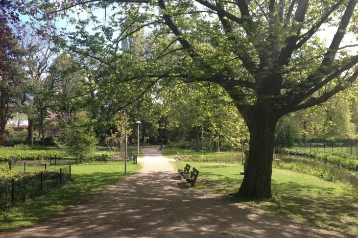 Bomen langs pad in park Oog in Al
